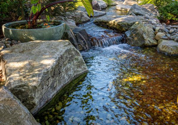 Pond Maintenance Tips