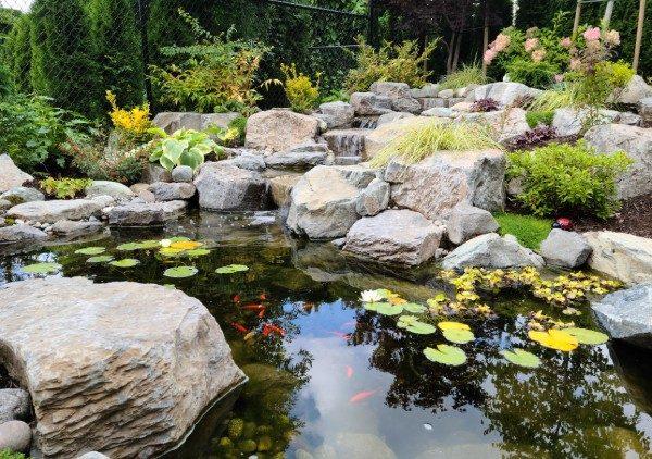 Tips for Feeding Pond Fish
