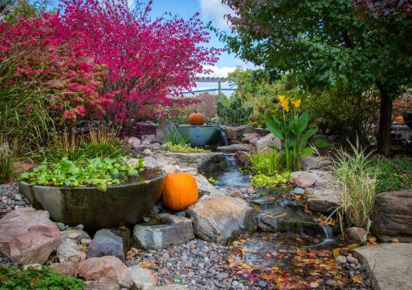 Autumn Pond Care Tips